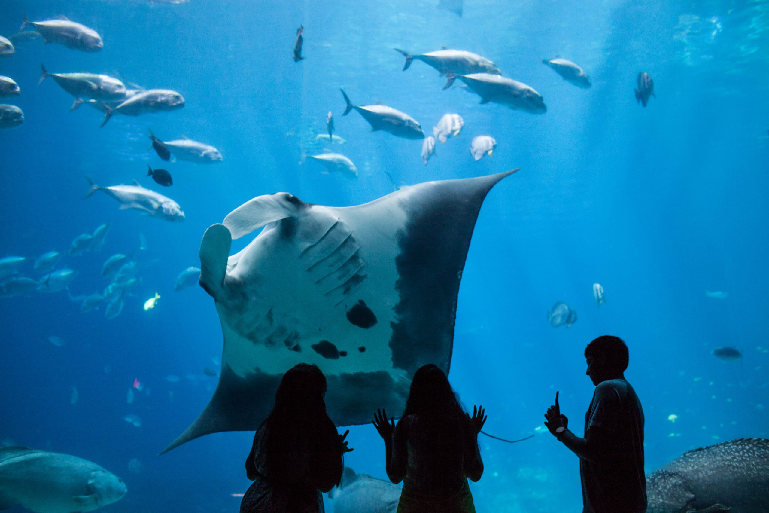 Georgia Aquarium is one of the top places to visit in Atlanta