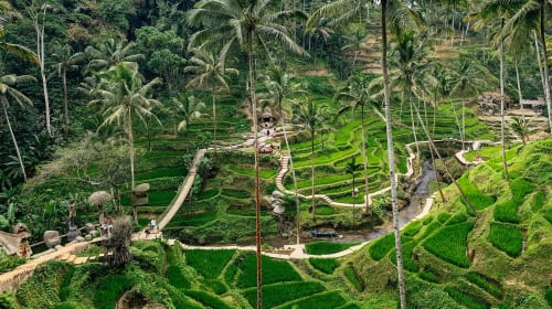 The Best of Bali - 2 Week Itinerary