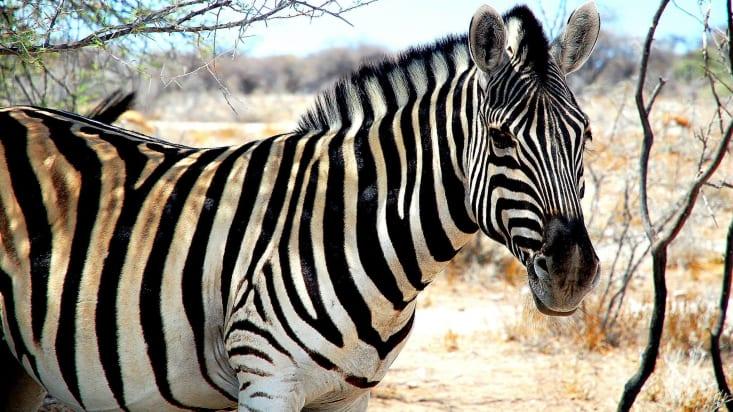 African road trip - Zambia, Zimbabwe, Botswana