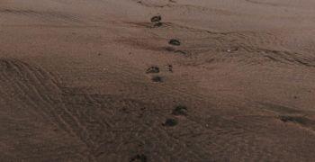 Footprint Trading