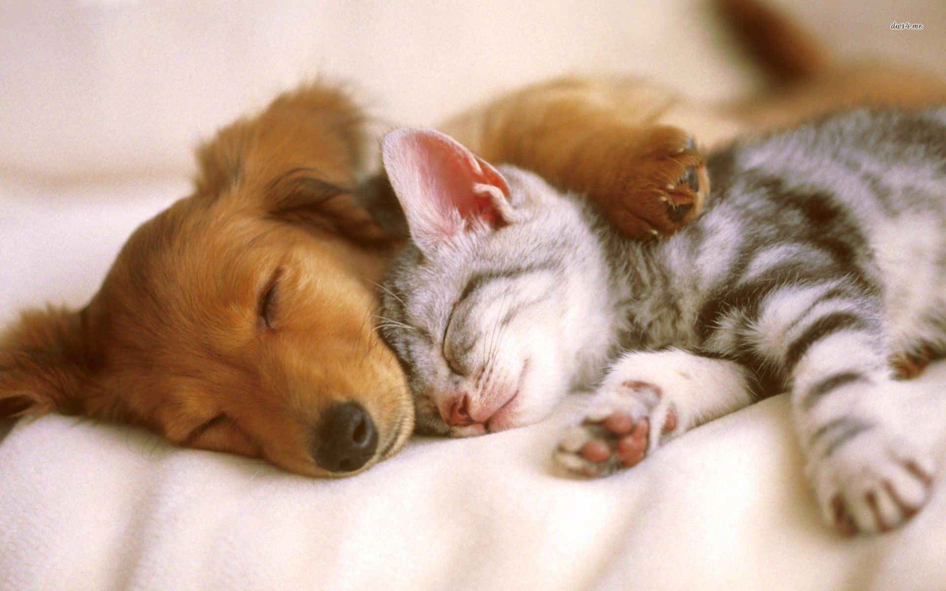 Cat & Dog Sleeping