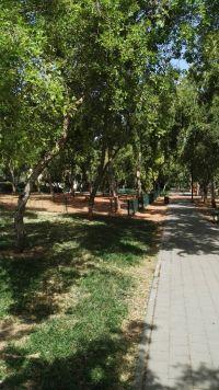 הצלת חורשת העמל ברובע הדר וכריתת 140 עצים עבור בניה, רמת השרון