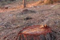 המנהל האזרחי כורת את יערות גוש עציון
