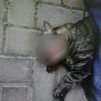 3 שנים מאסר על רציחת חתולה