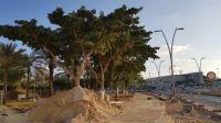 מצילים את העצים על שדרות הרצל