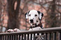 ענישה חמורה למתעללים בכלבים/בעח
