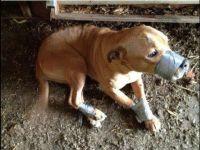 הוצאת חוקים נגד התעללות בבעלי חיים