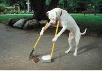 מחסור בגינות כלבים במרכז רחובות