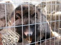 no more fur sale