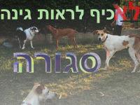 גינת כלבים לנווה סביון
