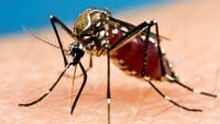 סוף למכת היתושים