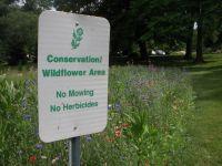 עזרו לעצור ריסוס של קוטלי עשבים וכיסוח דשא מכני בגיבעת ברנר