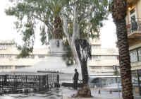 לשמר את האקליפטוס בעיר תחתית חיפה