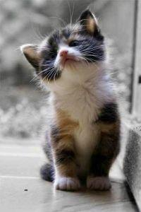 סרוס ועיקור חתולי רחוב בצור הדסה