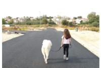 גינת כלבים נוספת באבן יהודה