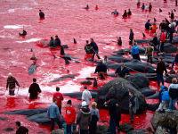זעקת הלוויתנים