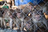 המשרד להגנת הסביבה - העבירו את קופי מזור לשמורת קבע!