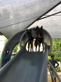 הקמת גינת כלבים