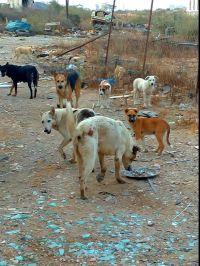Петиция требующая изменения положения животных