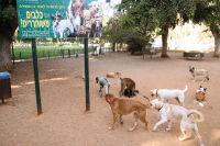 גינת כלבים באושיות