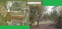 שימור יער אלונים מתחדש פרדס חנה - כרכור