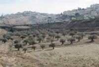 התנגדות לבנית אצטדיון בעמק הזיתים - נחל דרגה עליון