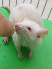 צמצום הניסויים בבעלי חיים