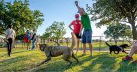 הקמת פארק כלבים בטירת כרמל