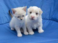 לא נוטשים כלבים וחתולים בגלל וירוס הקורונה