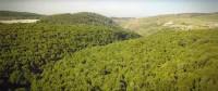 אומרים לא לציר צבאי בשמורת יער ברעם