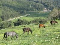 קדיתא אהובתי- להציל את אדמות קדיתא: כפר אקולוגי בהרי מירון
