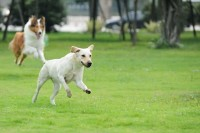 רוצים גינה לכלבים של הגבעה