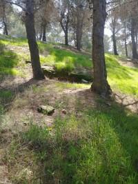 שומרים על החורש - הר חומה שלב ג