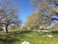 שמירה על הטבע ועלינו במועצה האיזורית עמק יזרעאל - אכיפת החוק והסדר
