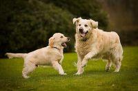 גינות כלבים בהרצליה