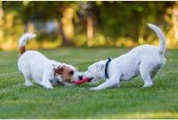 הקמת גינת כלבים בפארק שרונה ברחובות