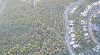 מצילים את היער הקהילתי של שלומי!