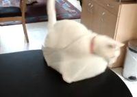 אל תתנו לחתול ללכת לחלל