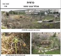 שמירה על אתר טבע עירוני בכפר הצמחים (אתר כרמית בירושלים)