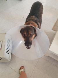 אנו דורשים מהערייה לטפל בבעיית הכלבים המשוחררים בעיר