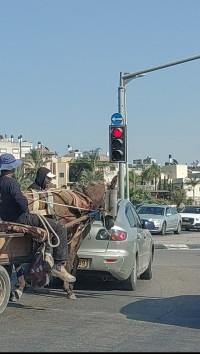 הורידו את הסוסים והחמורים מהכבישים