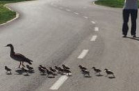נגד איסור הרכיבה בכביש באופן חד צדדי וללא חלופה הולמת