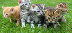להציב פינות האכלה לחתולי בתי חולים בארץ!