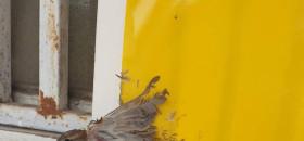 דורשים מרשת הום-סנטר להסיר את מלכודות הדבק מהמדפים