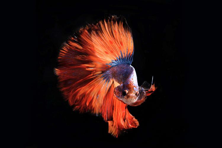 Macht euch mit einer klar definierten Positionierung zum großen Fisch im kleinen Teich