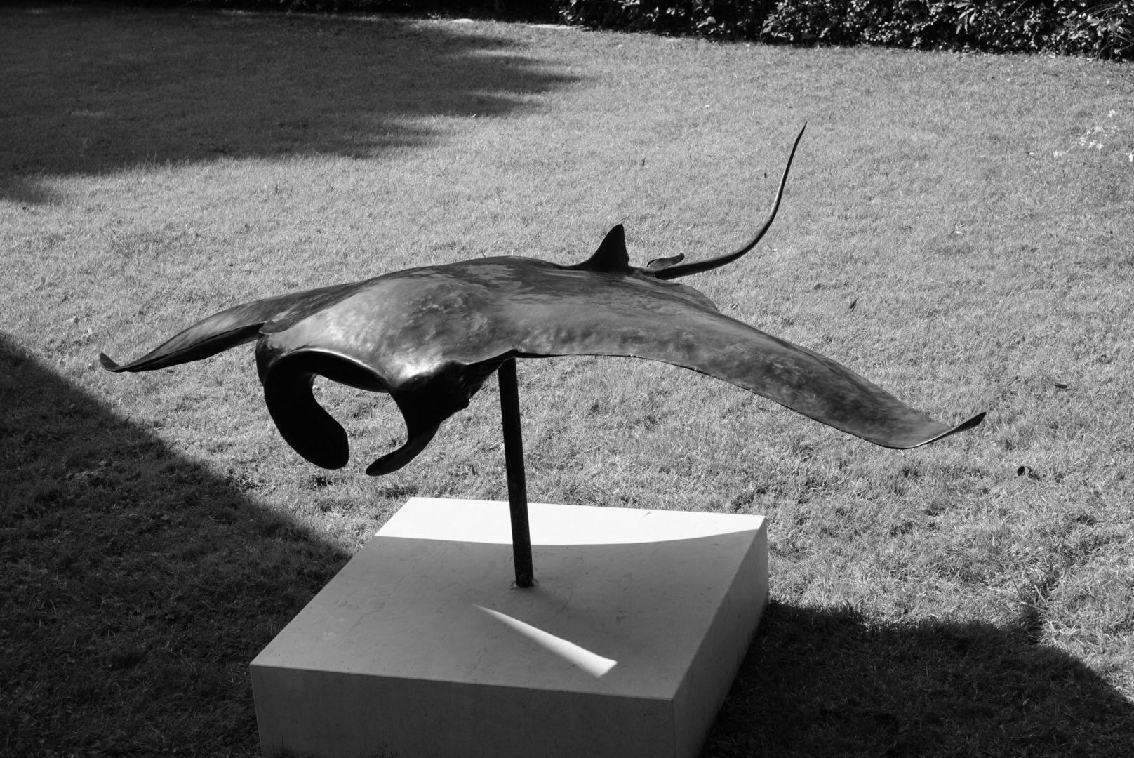 Raie Manta, sculpture en cuivre, Aurélien Raynaud, peintre sculpteur animalier