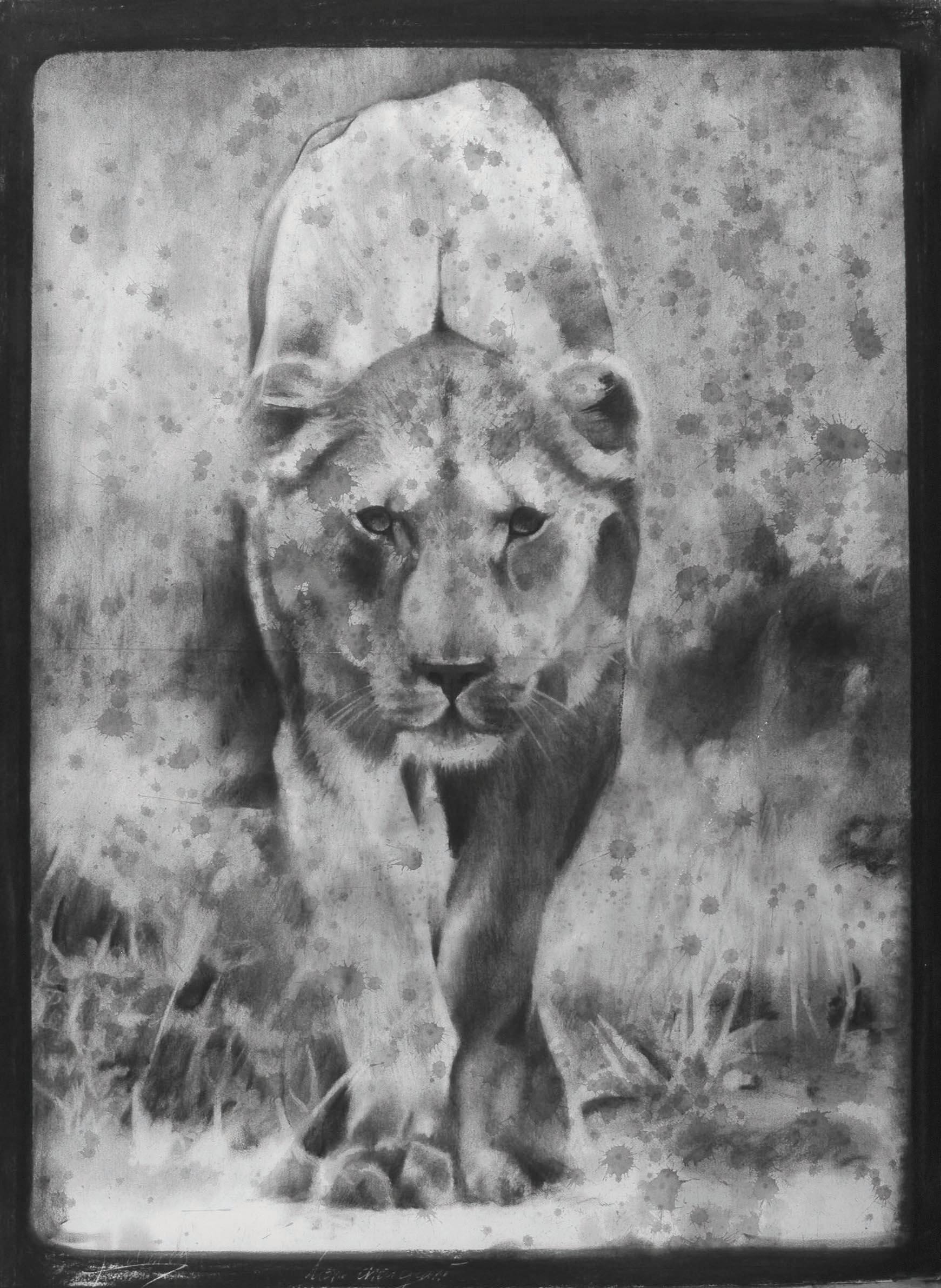 Lionne, fusain, technique mixte, Aurélien Raynaud