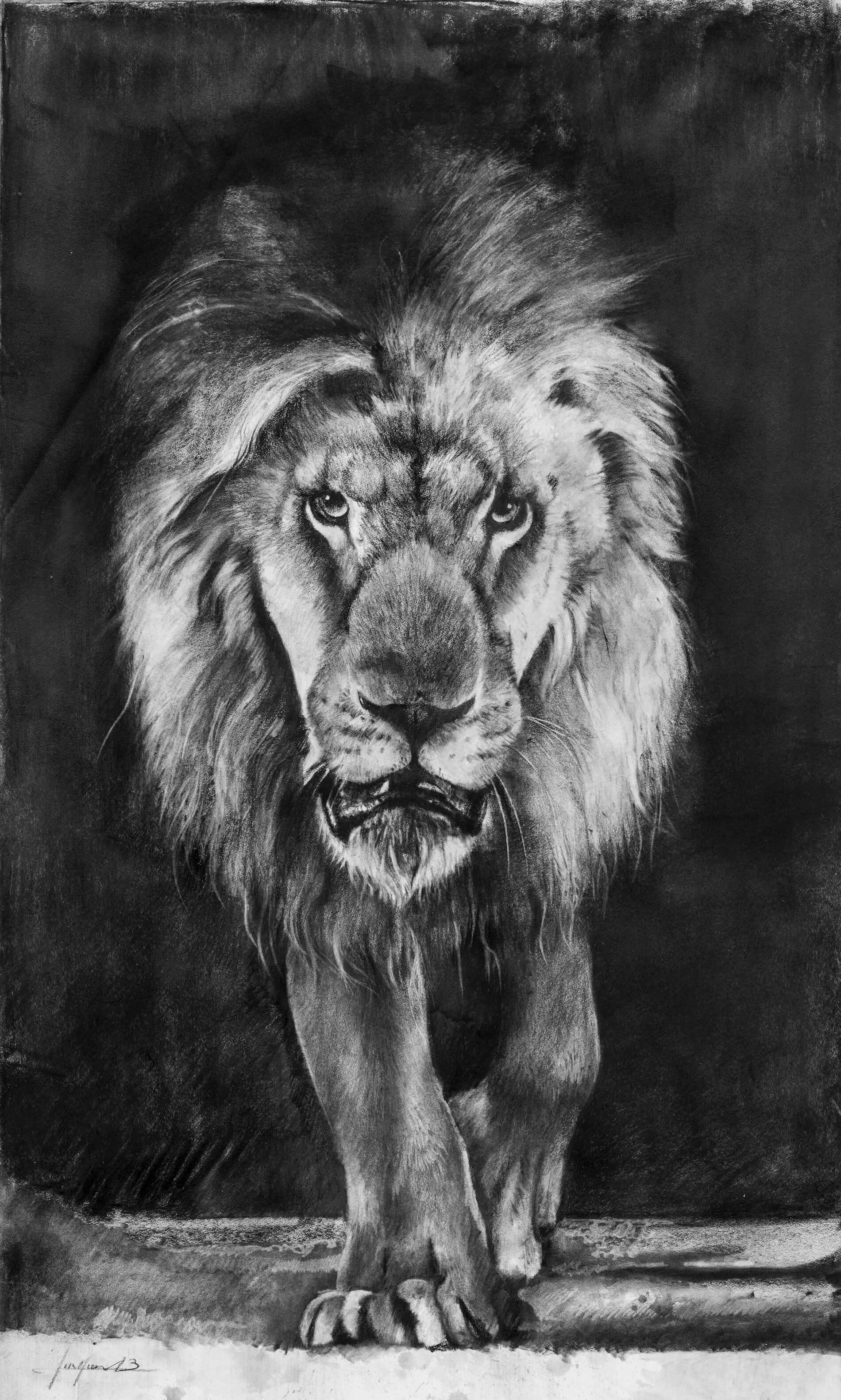 Dessin, fusain, lion par Aurélien Raynaud
