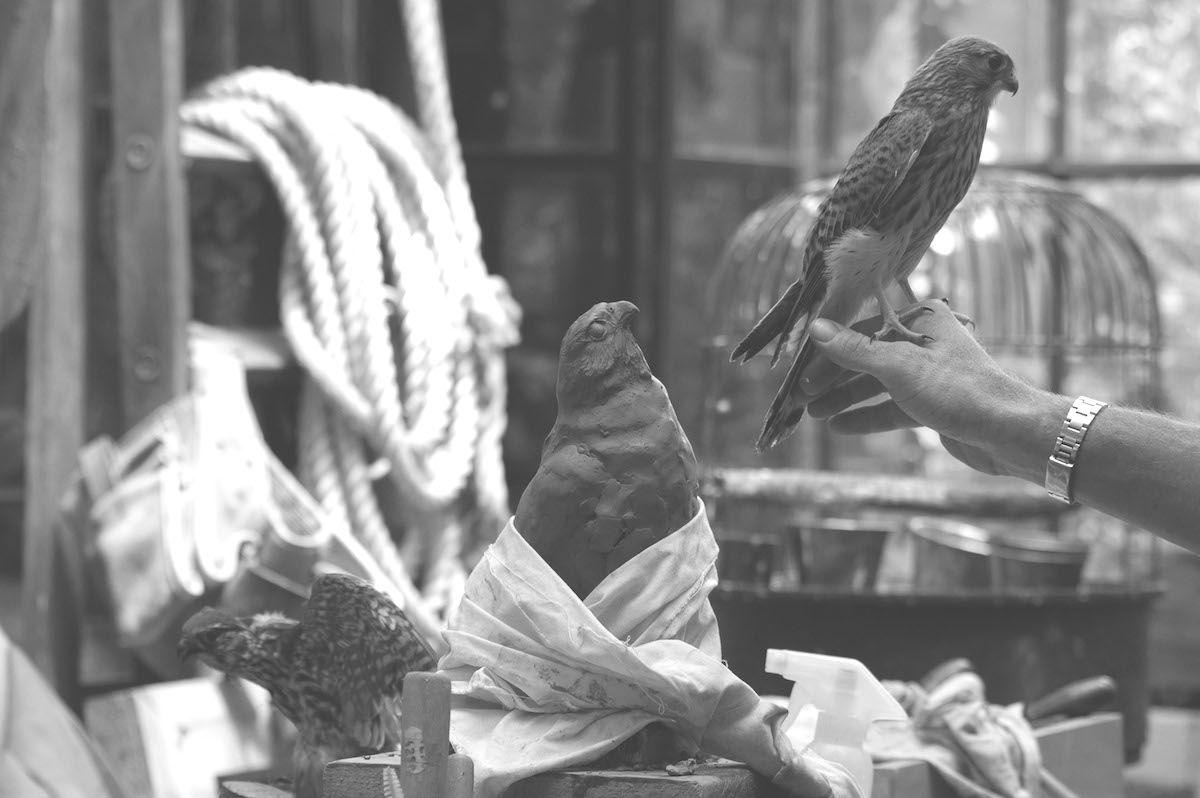 Oiseau, argile,@aurelienraynaud