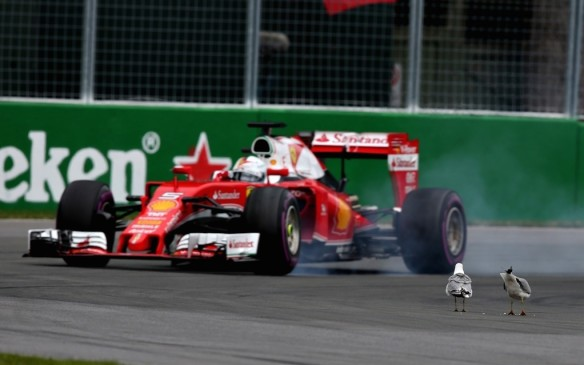 <p>Montreal historically has had its fair share of surprises, including wildlife. On occasion, the race has seen groundhogs venture onto the track. This year, it was a few stubborn pigeons that caught the eye of Vettel, causng him to lock up his brakes, which cost him some valuable time.</p>